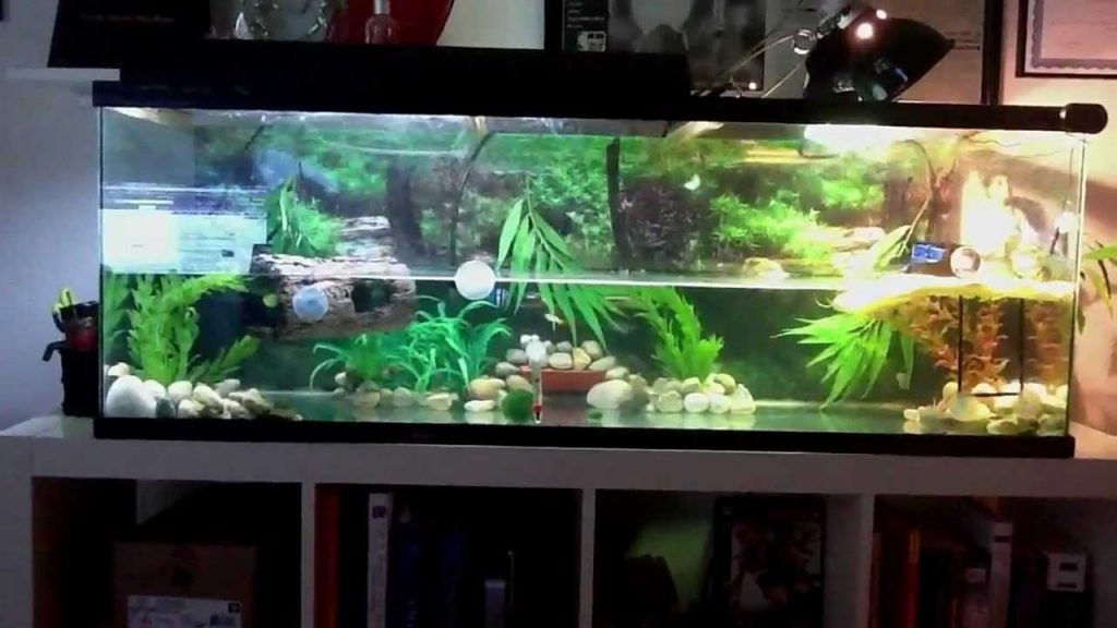 Practical Guide to Buying a New Aquarium Tank