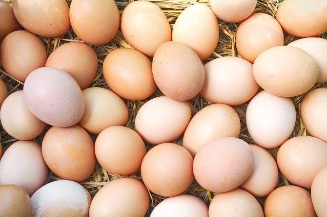 fresh organic egg